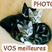 3 chatons ecolo