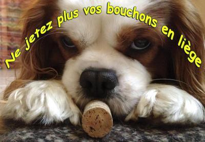 Did bouchon 1