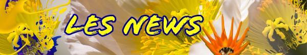 Les news 7l
